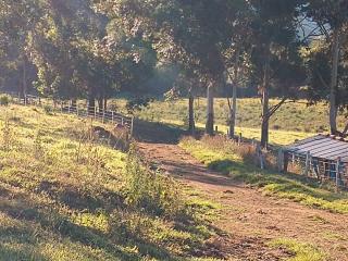 Baependi: Fazenda 64 Hectares á venda em Carvalhos-MG 18