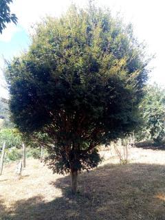 Baependi: Sitio em Baependi/MG de 62 Hectares 14
