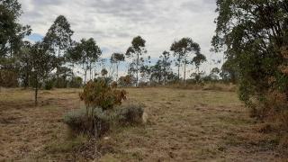 Baependi: Fazenda de 100 Hect. em Aiuruoca/MG 12