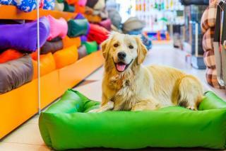Ótimo Pet Shop em Diadema.