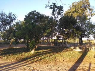 Cuiabá: VENDO!!! Uma área rural sítio com 29 hectares no assentamento Agro Ana na região do posto 120, sentido a cidade de Cáceres-MT 9