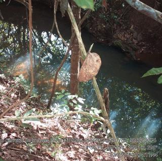 Cuiabá: VENDO!!! Um sitio de 15,62 Hectares na região do rio manso ha 120 km da cidade Cuiabá sendo 18 km de chão 17