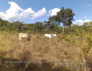 Cuiabá: VENDO!!! Um sitio de 15,62 Hectares na região do rio manso ha 120 km da cidade Cuiabá sendo 18 km de chão 25