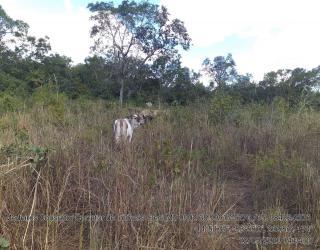 Cuiabá: VENDO!!! Um sitio de 15,62 Hectares na região do rio manso ha 120 km da cidade Cuiabá sendo 18 km de chão 5