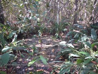 Cuiabá: VENDO!!! Um sitio de 15,62 Hectares na região do rio manso ha 120 km da cidade Cuiabá sendo 18 km de chão 9