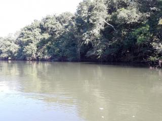 Cuiabá: VENDO!!! um sítio de 16.54 hectares na região do manso no porto de cima com 89 metros margeando o rio manso 15