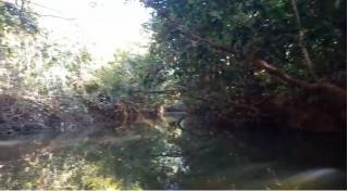 Cuiabá: VENDO!!! um sítio de 16.54 hectares na região do manso no porto de cima com 89 metros margeando o rio manso 7