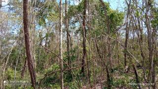 Cuiabá: VENDO!!! Um sítio de 33 hectares na região da sadia 3 a 50 km do trevo do lagarto 2