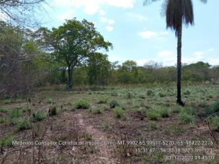 Cuiabá: VENDO!!! Um sítio de 33 hectares na região da sadia 3 a 50 km do trevo do lagarto 6