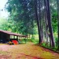 Alagoa: Chácara ótima de 10.000 m² em Alagoas-MG
