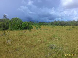Tartarugalzinho: Fazenda de 236 ha no Amapá 2