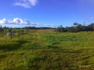 Tartarugalzinho: Fazenda de 236 ha no Amapá 3