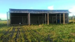 Tartarugalzinho: Fazenda de 236 ha no Amapá 6