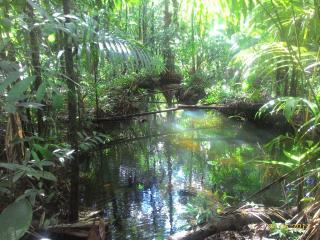 Tartarugalzinho: Fazenda de 236 ha no Amapá 7