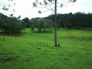 Rio Negro: Chácara a 800 metros da R. Bittencourt (BR-116). 4