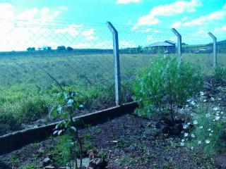 Ourinhos: Terreno/chácara De 1.500 M2 Em Ourinhos/sp 6