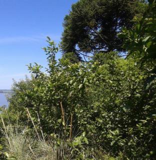 Santo Antônio da Patrulha: Santo Antônio da Patrulha - sítio grande, 97 m de frente para RS-030, vista p/ Lagoa dos Barros 7