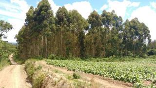 Itaiópolis: Terreno no interior de Itaiópolis 1