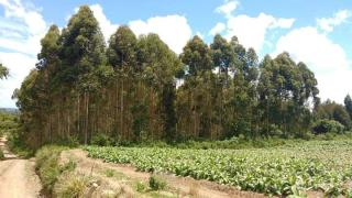 Itaiópolis: Terreno no interior de Itaiópolis 2