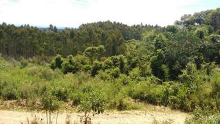 Itaiópolis: Terreno no interior de Itaiópolis 3