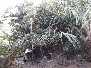 Rio de Janeiro: Casa com Terreno 6