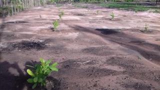 Timon: Terreno com 2 Hectares em Timon - MA 2