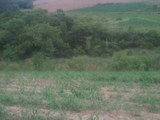 Camaquã: Vendo Área de 3,49 Hectares dentro da Cidade de Camaquã 4