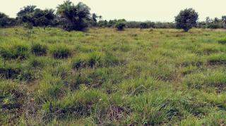 Camaçari: terreno escriturado em condominio fechado em jauá 1030 m2 1