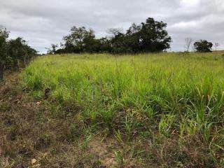 Coxim: Excelente Área 35 hectares 4