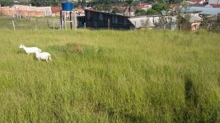 Jaguariaíva: Terreno 300m² por R$40 mil jaguariaíva 1