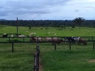 Água Azul do Norte: Fazenda para Gado no Sul do Pará 3