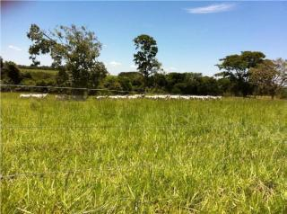 Mimoso de Goiás: OPORTUNIDADE DE VENDA (IMÓVEL RURAL) 5