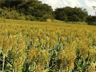 Mimoso de Goiás: OPORTUNIDADE VENDA IMÓVEL RURAL 2