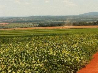 Mimoso de Goiás: OPORTUNIDADE VENDA IMÓVEL RURAL 3