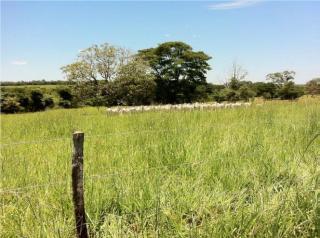 Mimoso de Goiás: OPORTUNIDADE VENDA IMÓVEL RURAL 4
